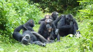 Uganda Chimpanzee Trek