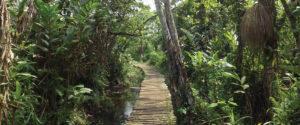 Nature Walk in Bigodi Wetland